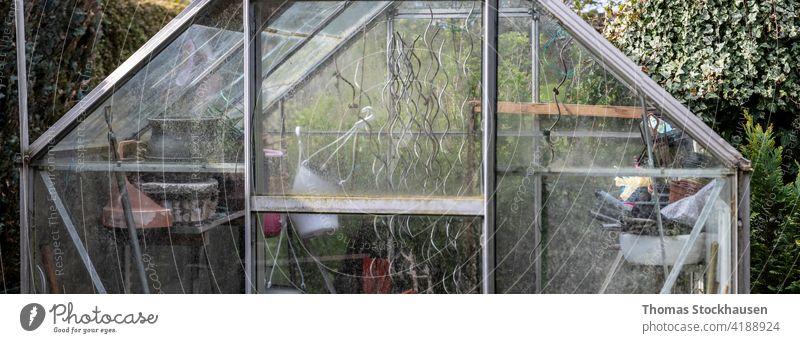 Glasgewächshaus in einem Kleingarten, Ausstattung innen Ackerbau Botanik Bodenbearbeitung Ökologie Umwelt Landwirtschaft Blume Lebensmittel frisch Garten