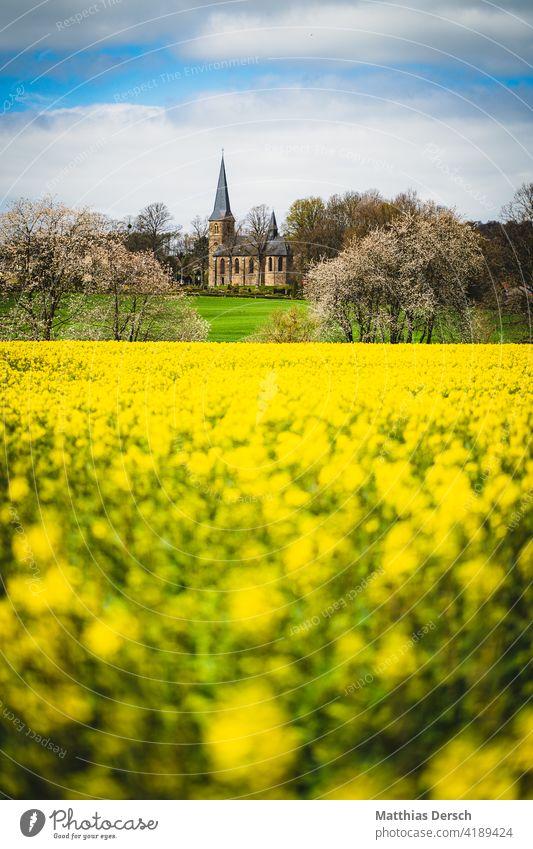 Die Kirche hinter dem Rapsfeld Rapsblüte Rapsanbau Kirchturm Landschaften Feld gelb Landwirtschaft Blühend