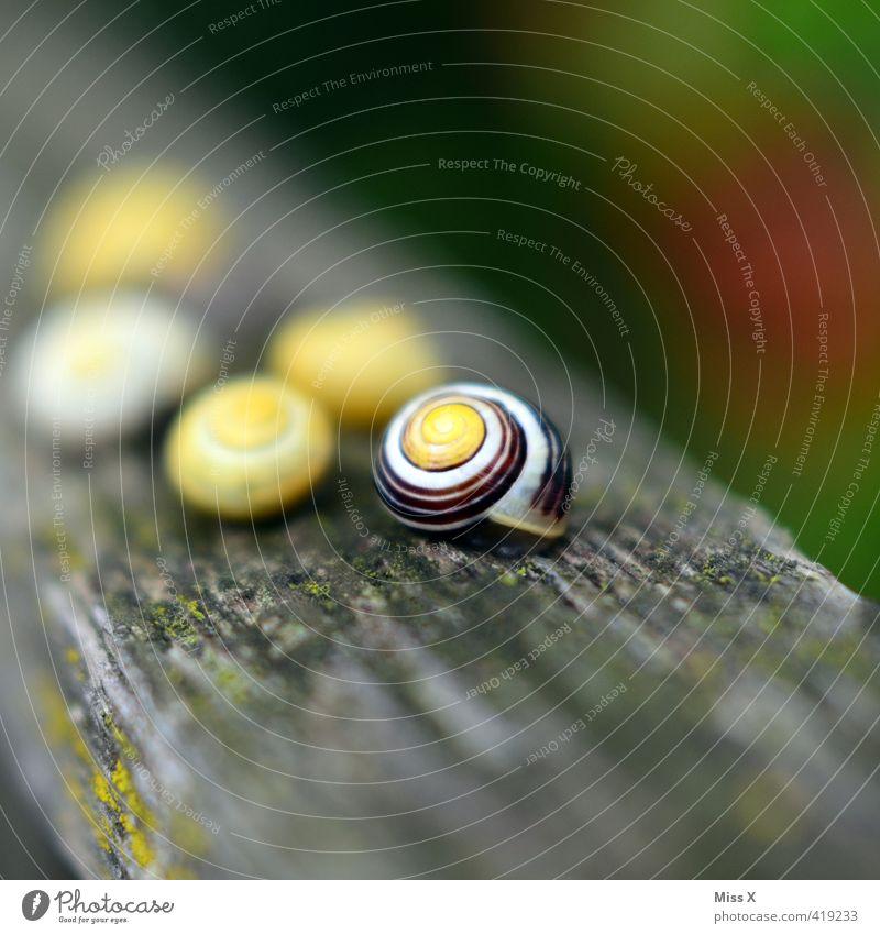 Schneckis Tier Schnecke Tiergruppe gelb schleimig Schneckenhaus Gartenschnecke Weichtier Schädlinge Hütte Kriechspur Farbfoto mehrfarbig Außenaufnahme