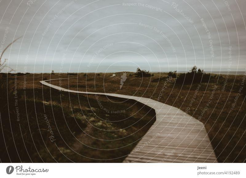 Auf dem Holzweg auf dem holzweg Wege & Pfade Düne Ostsee ostseeküste Darß Außenaufnahme Landschaft Himmel Wolken Natur Farbfoto Küste Meer Strand