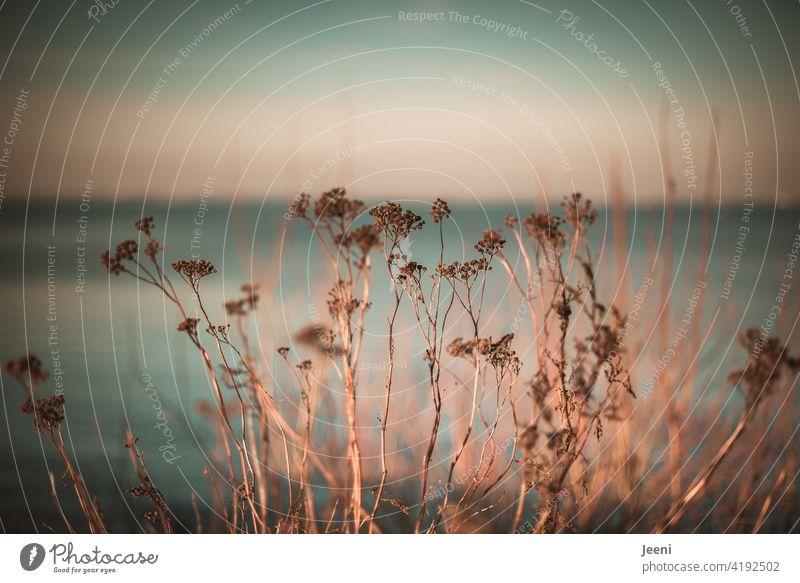 Pflanzen am Wegesrand im Sonnenschein mit einem hauchzarten blauen Hintergrund von Himmel und Meer Wege & Pfade Sonnenlicht zartblau Umwelt Natur natürlich