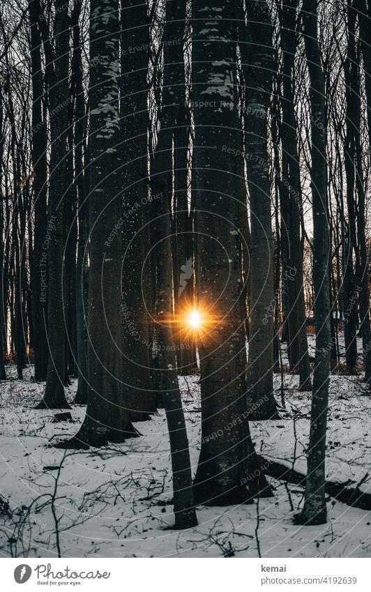 Abendsonne blitzt durch Bäume abends Baum Schnee Winter Sonne Sonnenstern orange Wald winterlich Natur Sonnenlicht Gegenlicht einsam Menschenleer Kontrast