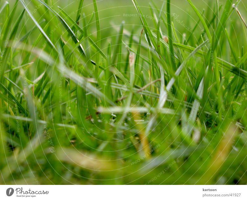nano Wiese grün nah Nanometer grass Natur Bodenbelag graßhalm