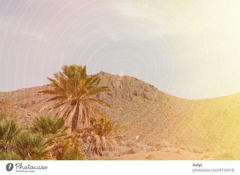 Wüstenplatz mit Palmen in Almeria (Südostspanien) Himmel wüst Natur Spanien Baum Landschaft Sommer Handfläche grün blau sonnig Sonne Berge u. Gebirge