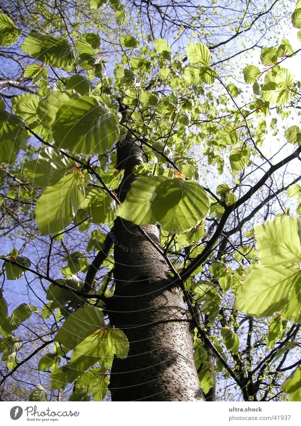 Tree. Himmel Baum grün Blatt