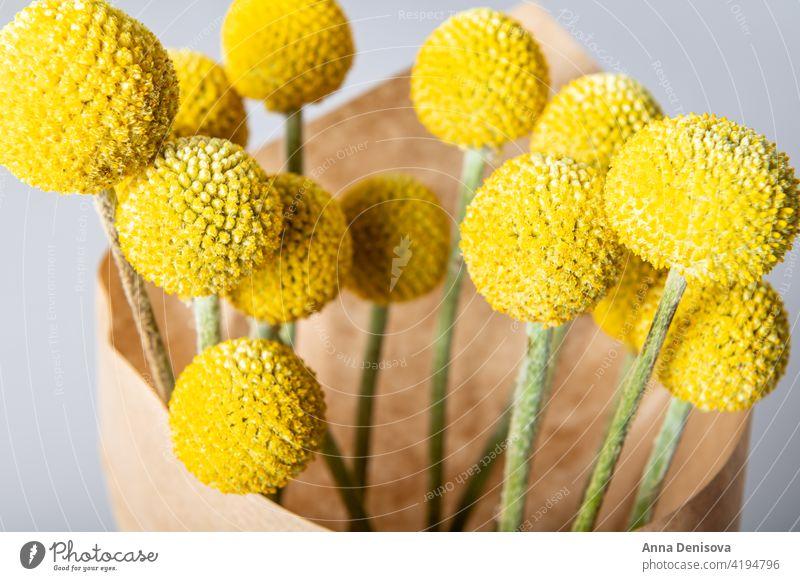 Craspedia globosa trockene Blumen Trockenblumen Billy-Knöpfe Blumenstrauß senfgelb Ball Bastelpapier Trommelstöcke Ewig trocken Natürlichkeit geblümt Ordnung