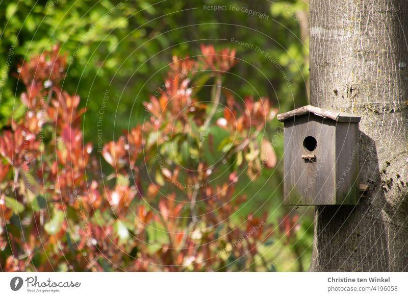 """Ein Nistkasten aus Holz hängt am Stamm eines Walnussbaumes. Sonnenschein mit Licht und Schatten, im Hintergrund eine Glanzmispel """"Red Robin"""" mit frisch ausgetriebenen roten Blättern."""