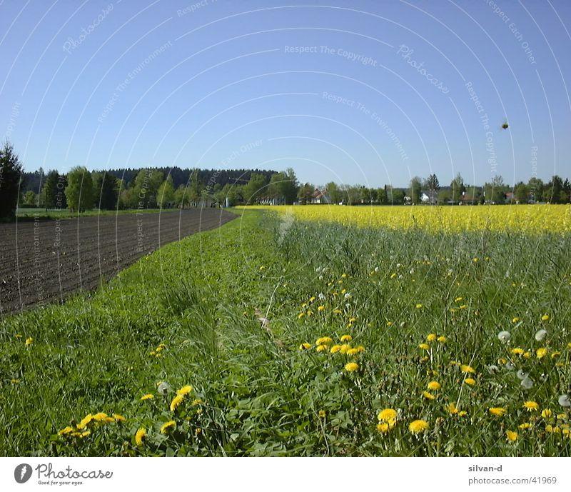 Rapsfeld Wiese Feld