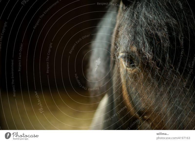 Pferd mit Dauerwelle, nach dem Regen Pferdeauge Auge Kopf braun Mähne Tier Nutztier Blick Teilansicht Textfreiraum