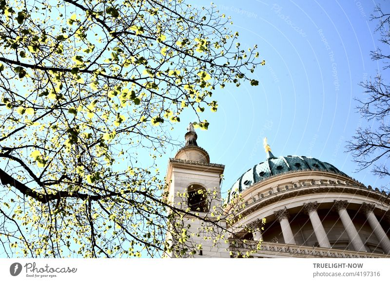 Die ersten zart grünen Blätter an den Ästen beleben den Blick von unten auf die Tambourkuppel und einen der vier Ecktürme der Denkmal geschützten Kirche St. Nikolai in Potsdam vor blass blauem Himmel im Frühling