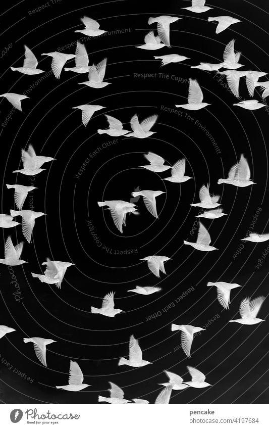 objektiv | negativ Filmmaterial analog belichtung belichtet Negativ schwarz-weiss fotografie vogel Schwarm Vogelschwarm Stern Foto