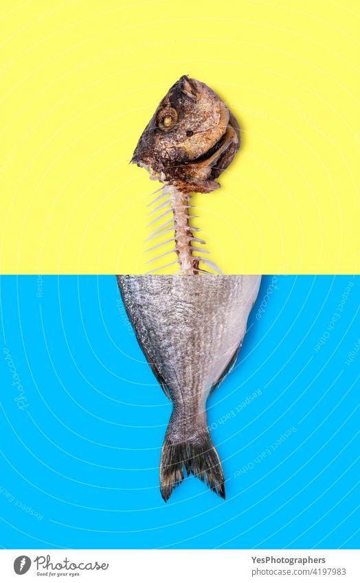 Essen von Fisch Konzept. Roher Fisch und Fischskelett Fotomontage. oben Tier Hintergrund zweifarbig blau Knochen Wandel & Veränderung Klimawandel Collage Farbe