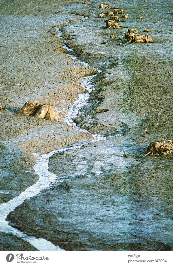 Rinnsal Bach Quelle Wasser Landschaft
