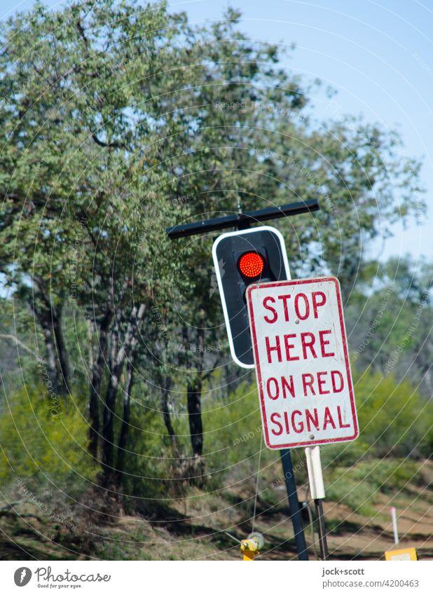 STOP HERE ON RED SIGNAL Australien Buschland Baum exotisch Rote Ampel Verkehrsschild Verkehrszeichen Englisch warten Signal leuchten Natur Sicherheit