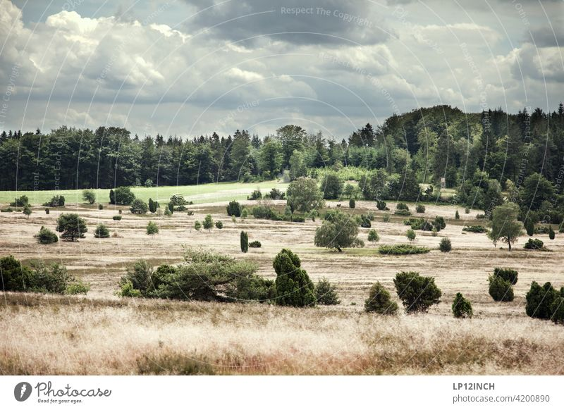 Die Lüneburger Heide Spaziergang Natur Sommer Herbst Wald Pflanze Landschaft Kulturlandschaft Urlaub Ferien & Urlaub & Reisen Busch Geest Wolken Gras idyllisch