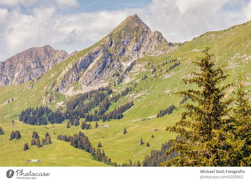 Blick auf die schönen Schweizer Alpen Sonnenuntergang Top weiß Hügel Reiseziel Gras Bäume malerisch Panorama Klettern laufen panoramisch Wälder riesig Cloud
