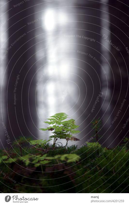 Back to the roots | der Bäume, da unten wachsen die Überlebenskünstler. Farne und Moose Wachstum Moosteppich Restlicht Waldboden Pflanze natürlich düster