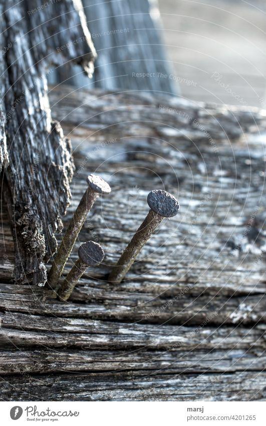 Dreisamkeit. Drei rostige Nägel, die ihren Zweck nicht mehr erfüllen. Standhaft widersetzen sie sich dem Trend und dem Zahn der Zeit. Rost Holz Metall alt