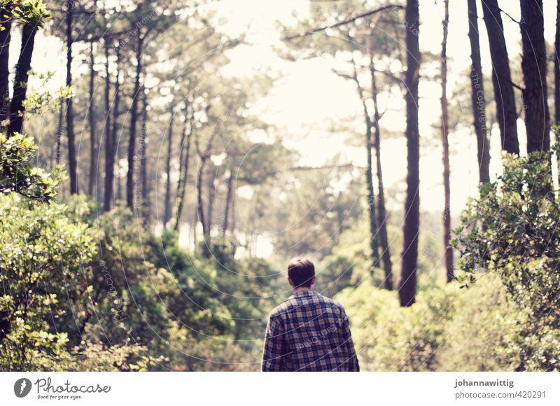 take me anywhere - Mensch Natur Jugendliche Ferien & Urlaub & Reisen Pflanze Sommer Baum Einsamkeit Wald Erwachsene Umwelt 18-30 Jahre Leben Bewegung Küste Glück