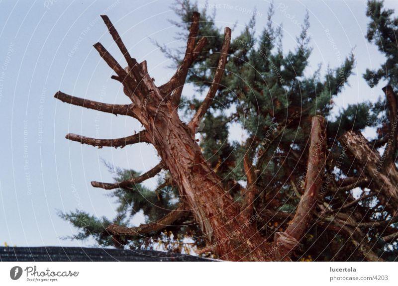 Ist's noch ein Baum? Baum braun Rest matt