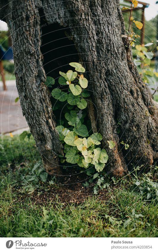 Baumstamm Neuanfang Natur Wald Außenaufnahme Farbfoto Menschenleer Herbst Baumrinde Beginn Licht Wachstum Rinde Pflanze Blatt braun grün Holz Umwelt Tag
