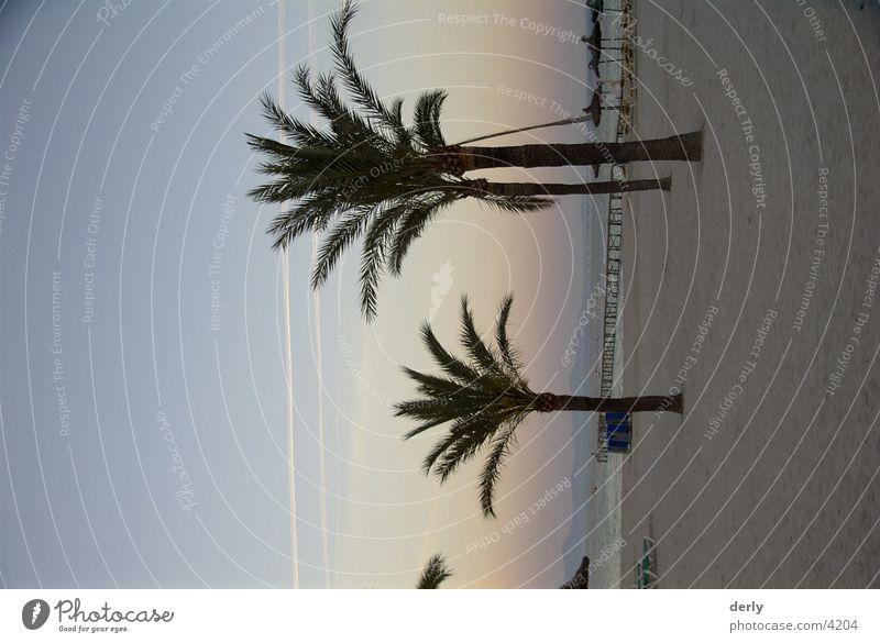 Palmen am Strand Strand Palme Mallorca