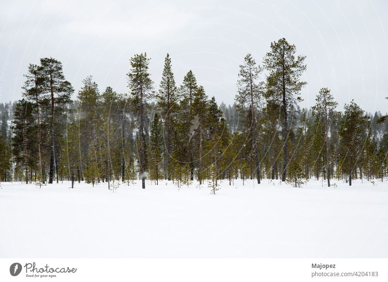 Schöne und entspannende Landschaft. Schnee in einem Wald in Lappland, Finnland, Europa gefroren natürlich Wetter Park Saison Holz Eis Bäume Szene schön