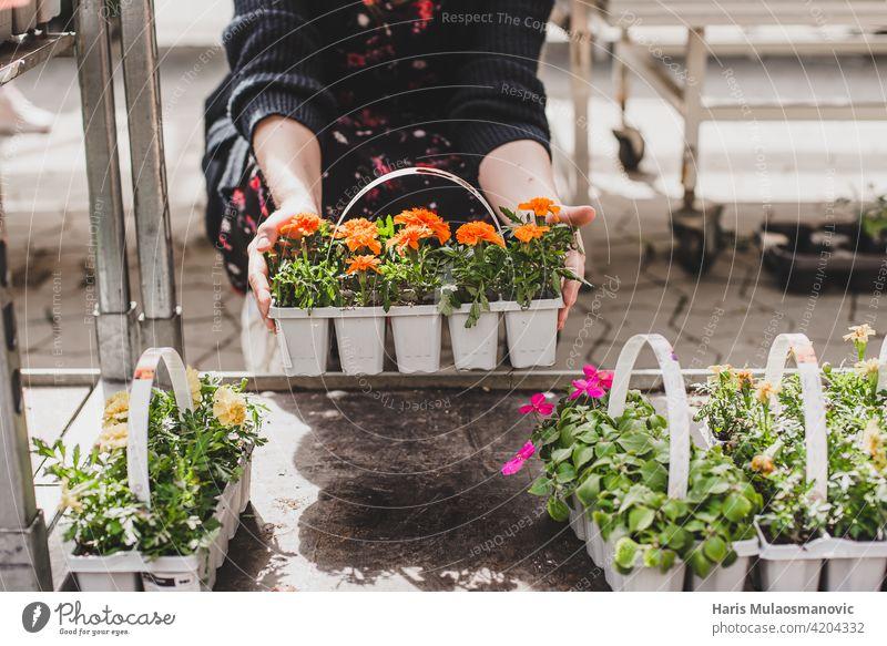 Frau hält Töpfe mit kleinen frischen Blumen schön Blüte kaufen Pflege Kaukasier Zentrum Wahl auserwählend wählte Nahaufnahme farbenfroh wirtschaftlich Kunde