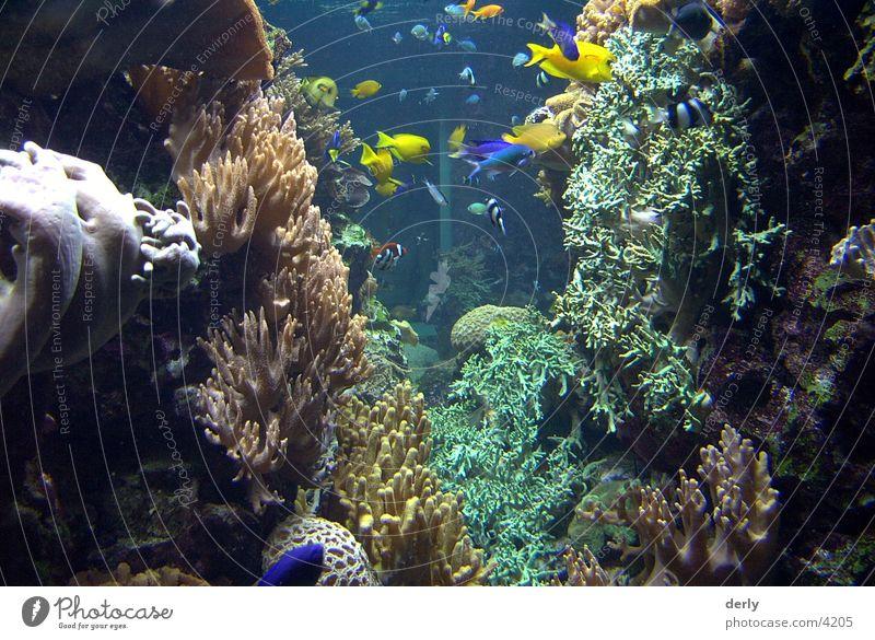 Unterwasser Welten Zoo Verkehr Fisch Unterwasseraufnahme