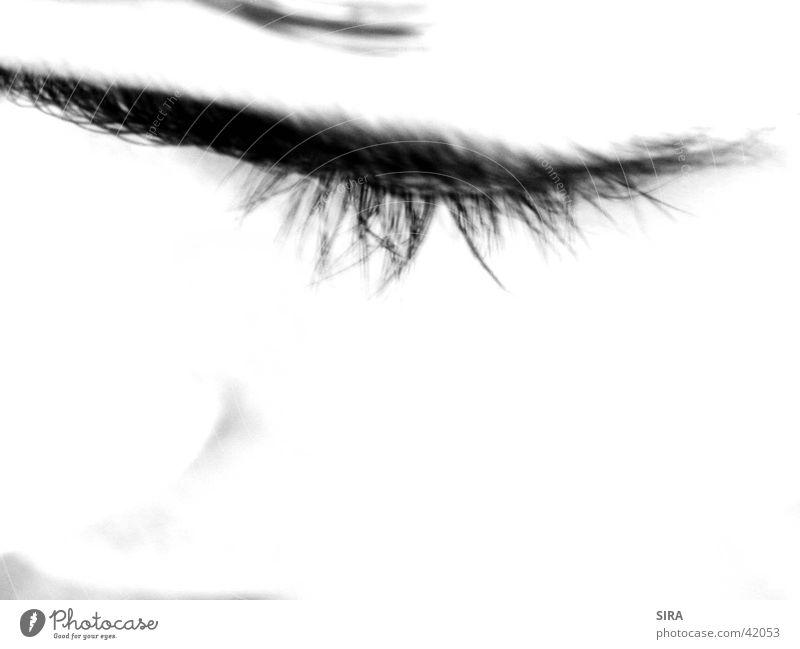 Lash Mensch Auge Wimpern