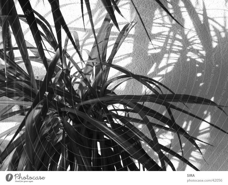 Palm Palme Pflanze