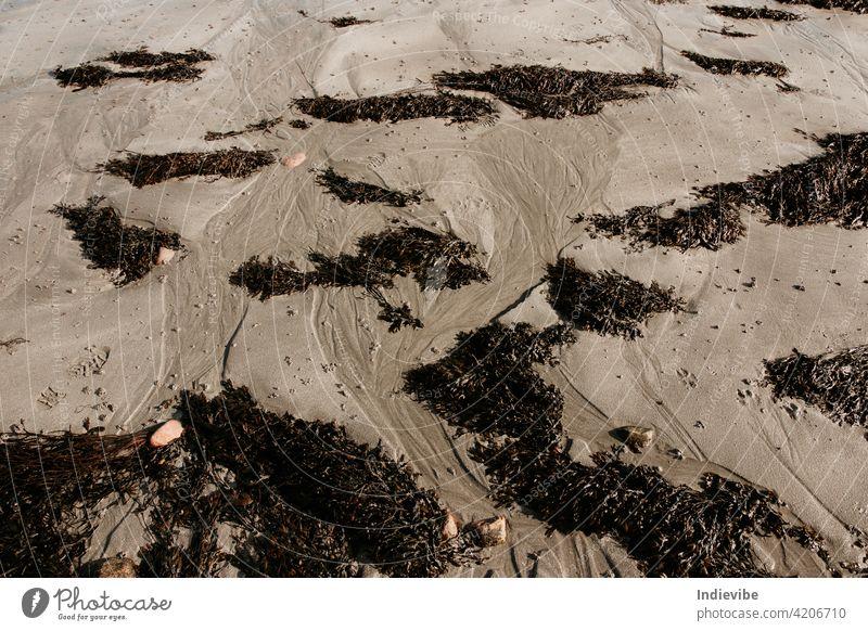 Wet Ozean Strand Sand mit dunklen wilden Seegras. Low Tide Ozean Ufer Landschaft in Irland. Republik Irland dunkel schwarz nass Ebbe Gezeiten danach dreckig