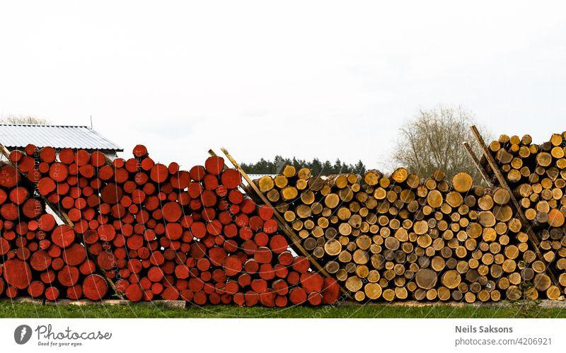 Holzeinschlag im Wald. Frisch geschlagene Baumstämme aufgestapelt. Holzlager für die Industrie. Gelbe und rote Baumstämme Natur grün Himmel Markt Ackerbau Feld