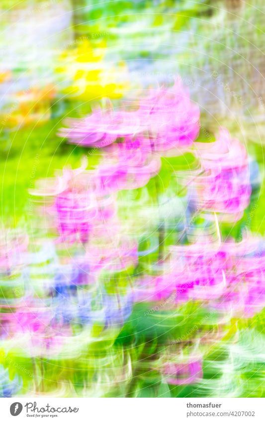 sehr bunte Frühlingsblumen dynamisch verfremdet Blüten Blumen Farbe abstrakt Dynamik hell optimistisch Garten hysterisch