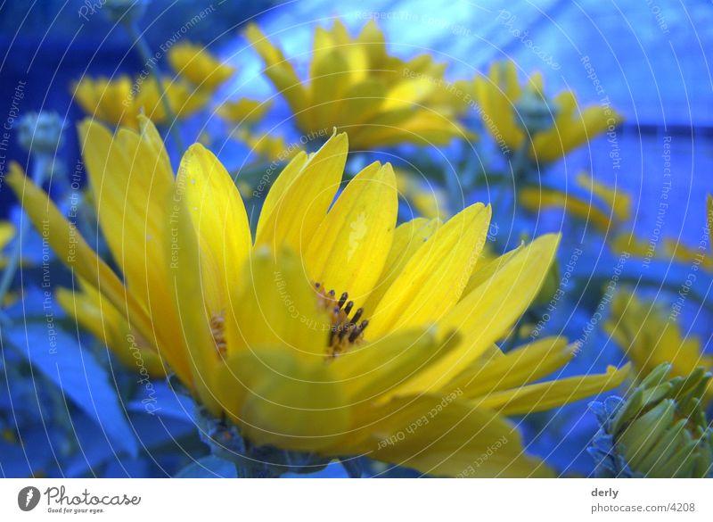 Gartenblumen Natur Blume