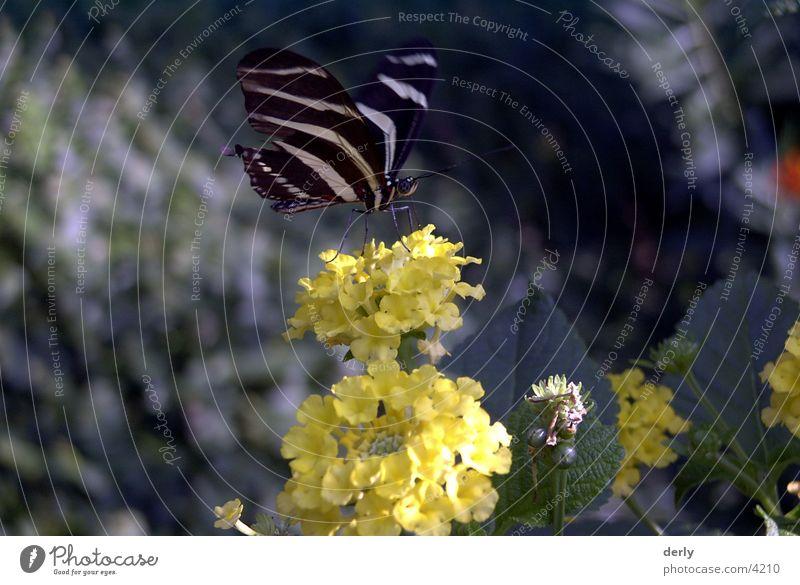 Schmetterling Blume Schmetterling
