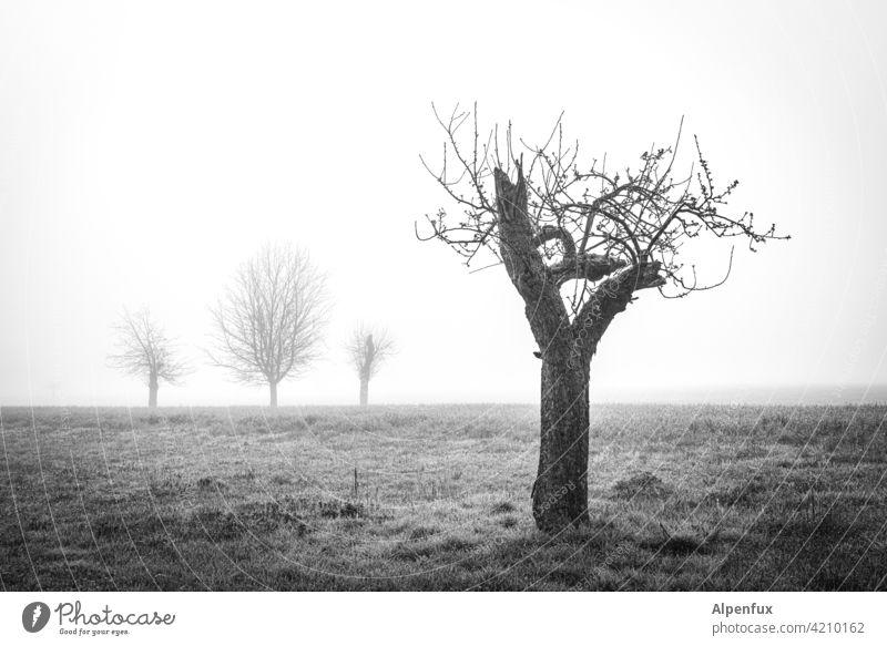 Am Rand der Gesellschaft Baum kahler Baum Nebel Landschaft Herbst Stimmung allein alleinstehend alleine Einsamkeit stille Außenaufnahme kalt ruhig Stille Umwelt