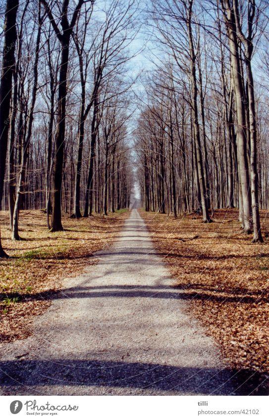 Waldweg Natur Himmel Sonne Wege & Pfade