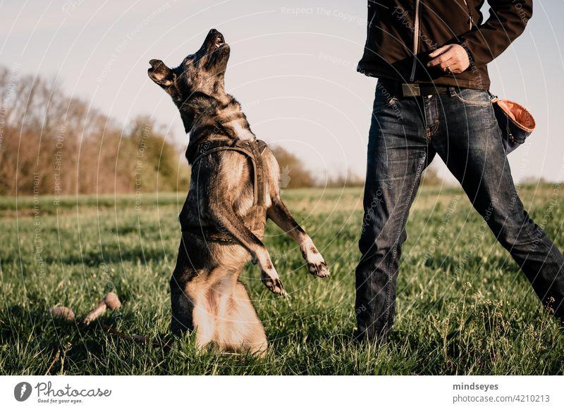 Hund macht Männchen auf der Wiese bester Freund haustier spielen gemeinsam Freundschaft Natur Gras erziehung ausbildung Training