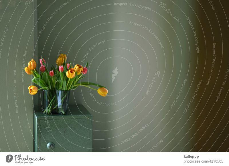 muttertag blumen Blumen Natur Blüte Pflanze Frühling Garten Farbfoto Sommer Muttertag Muttertagsgeschenk Blühend gelb schön natürlich interior interior design