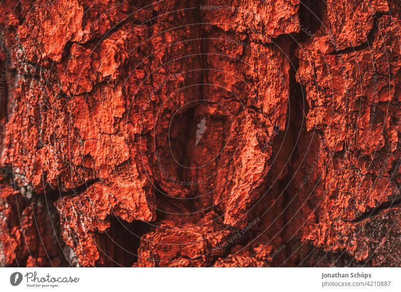 rot angemalte Baumrinde Strukturen & Formen Wald Farbfoto Natur Nahaufnahme natur Rinde Outdoor Außenaufnahme farbe rote Farbe Waldsterben Warnfarbe