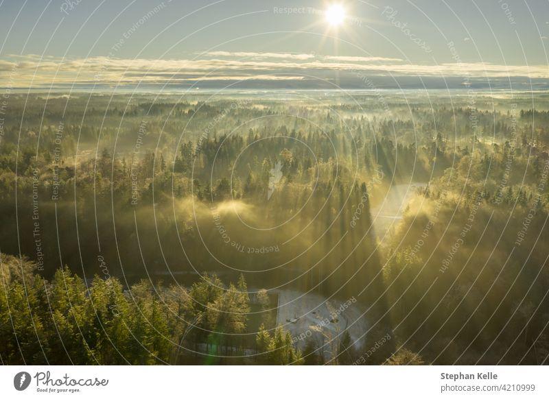 Wunderschöner nebliger Morgen mit einem Luftbild über einen nebligen Wald zur Winterzeit, während die Sonne die Baumkronen erwärmt. Nebel Antenne abstrakt Natur