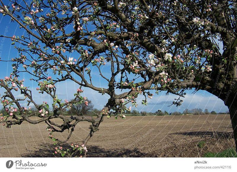Landschaft Baum Feld Natur