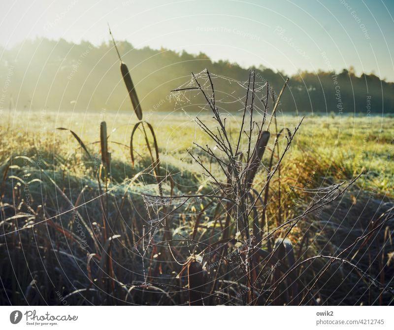 Feldrand Sonnenlicht Detailaufnahme Außenaufnahme Biotop Landschaft Umwelt Natur Pflanze Schönes Wetter Sträucher leuchten ruhig Zufriedenheit Idylle Halm