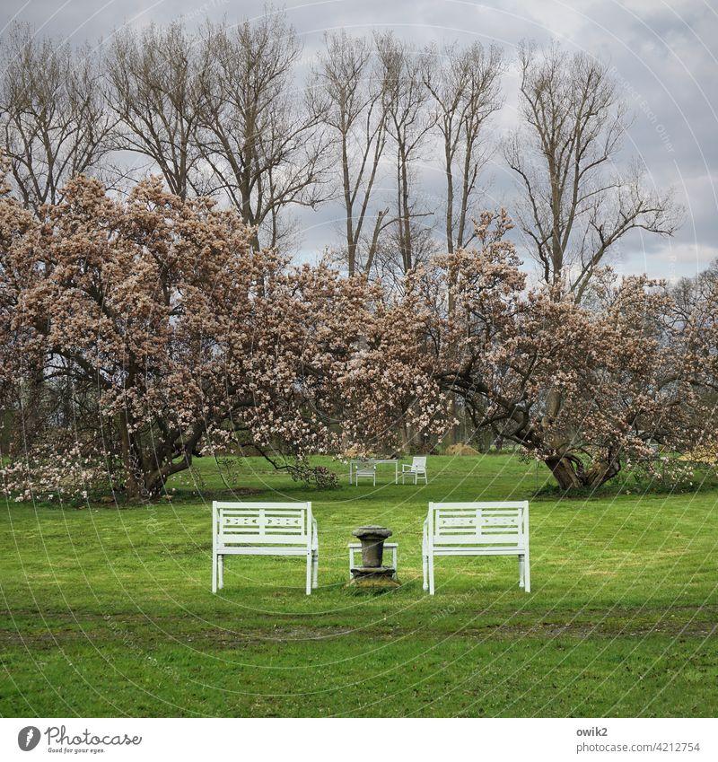 Symmetrisches Idyll Schlosspark Symmetrie Anordnung Bänke Wiese Sträucher Magnolie Baumblüte Himmel Wolken Bäume Rasen Frühling Gras grün Pflanze blau Park