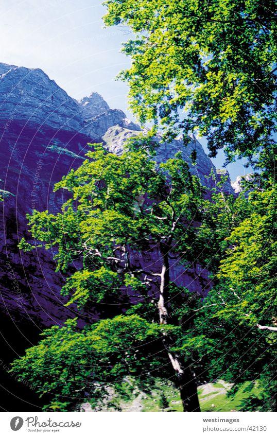 BaumevorBerge grün Sommer Blatt Berge u. Gebirge Alpen Felswand