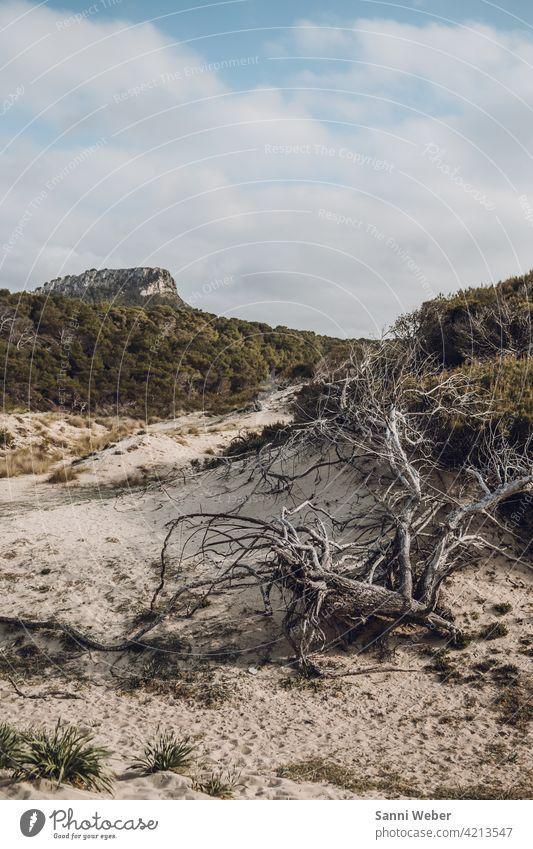 Strand von Cala Mesquida auf Mallorca Stranddüne Sand Meer Himmel Ferien & Urlaub & Reisen Wolken Küste Sonne blau Wind Natur Düne Außenaufnahme Farbfoto Umwelt