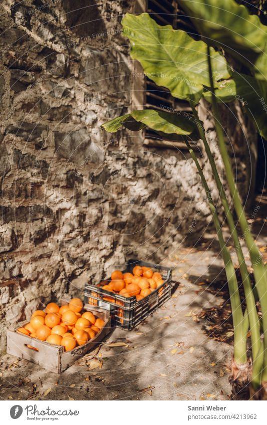 Orangen Lebensmittel Frucht Gesundheit frisch süß Vitamin Ernährung lecker Bioprodukte Vegetarische Ernährung Gesunde Ernährung Farbfoto natürlich vitaminreich