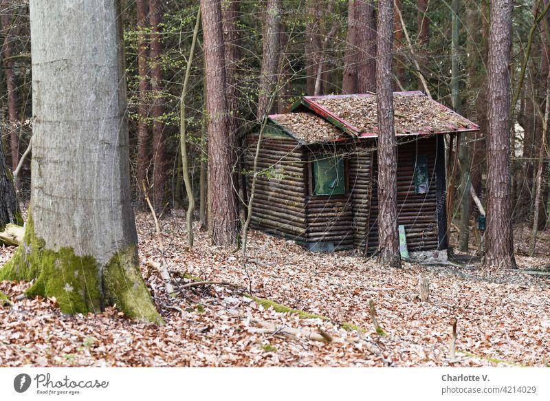 Wald-Datsche Einsiedelei Holzhäuschen Hexenhaus Hexenhäuschen Außenaufnahme Hütte dunkel Menschenleer Natur Einsamkeit Haus Baum Bäume alt Tag Farbfoto ruhig