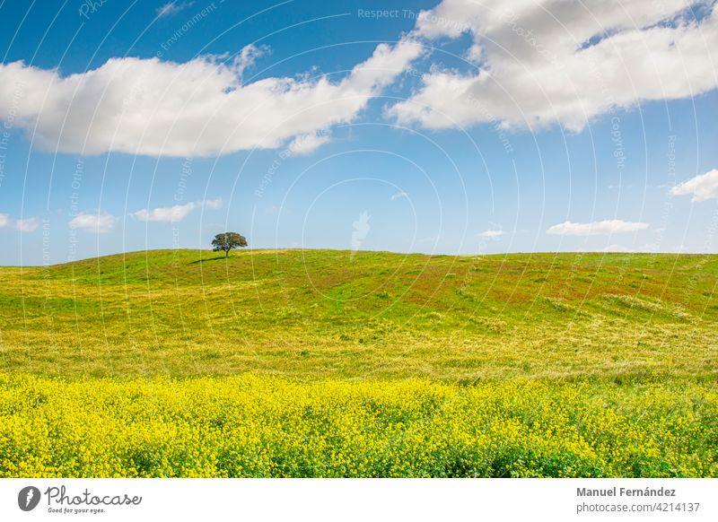 Allgemeine Aufnahme einer Wiese in Extremadura, Spanien, mit grünem, gelbem und rotem Gras, an einem sonnigen Tag mit einer Eiche am Horizont. Natur mediterran